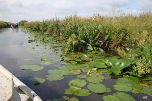DSL-Erfolge-Renaturiertes Ufer Semkenfahrt